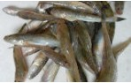 秋季养鱼注意事项