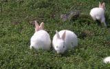养兔必不可少的六种药物